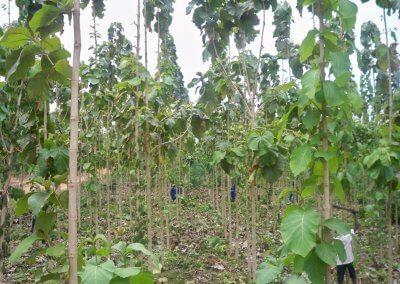 Tending & Pruning-4